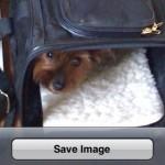Как сохранить изображения из браузера на iPhone?